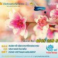 Vietnam Airlines nhận chở mai, đào đón Tết 2020